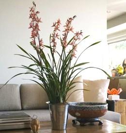 Casa immobiliare accessori fiori finti sia - Mesa immobiliare ...